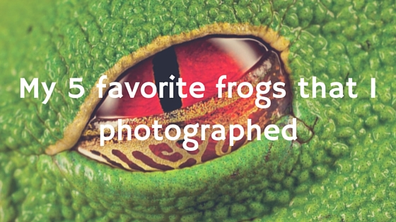 Nature photography: My 5 favorite frogs