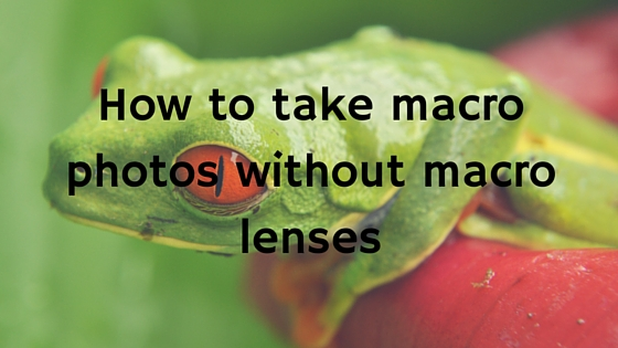 How to take macro photos without macro lenses
