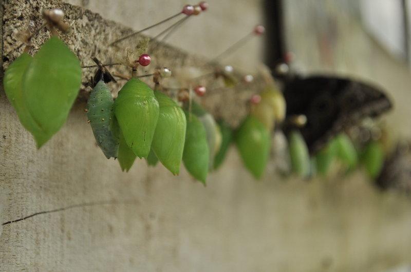 Explore Tikizia Mariposario