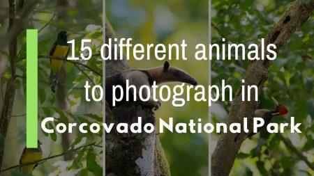 15 different animals to photograph in Corcovado National Park