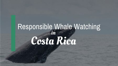 Responsible Whale Watching in Costa Rica